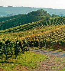 La bellezza perfetta delle colline è il risultato di un lavoro di generazioni di viticoltori...