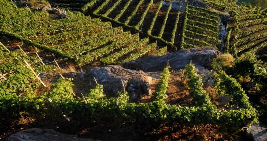 Via dei Terrazzamenti, parlano le vigne