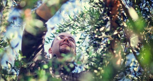 Umbria: olive, trekking e bruschette