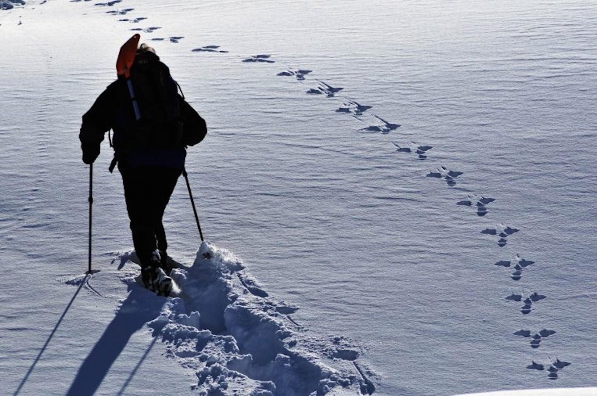 La montagna incantata con le ciaspole ai piedi