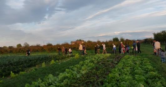Farm Experience in Romagna