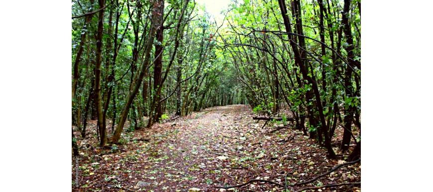 Tra la natura del Parco del Conero