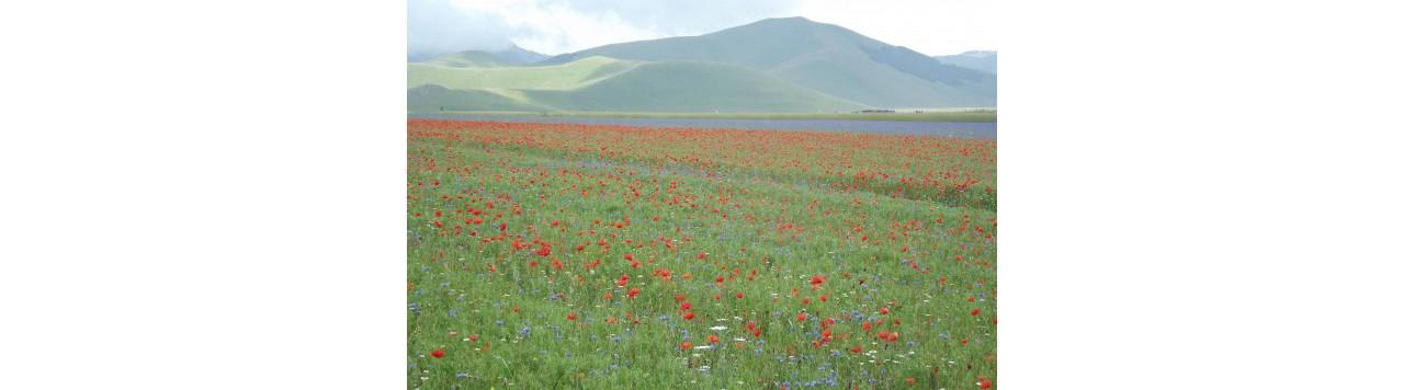Amare la natura, il progetto Diatomea